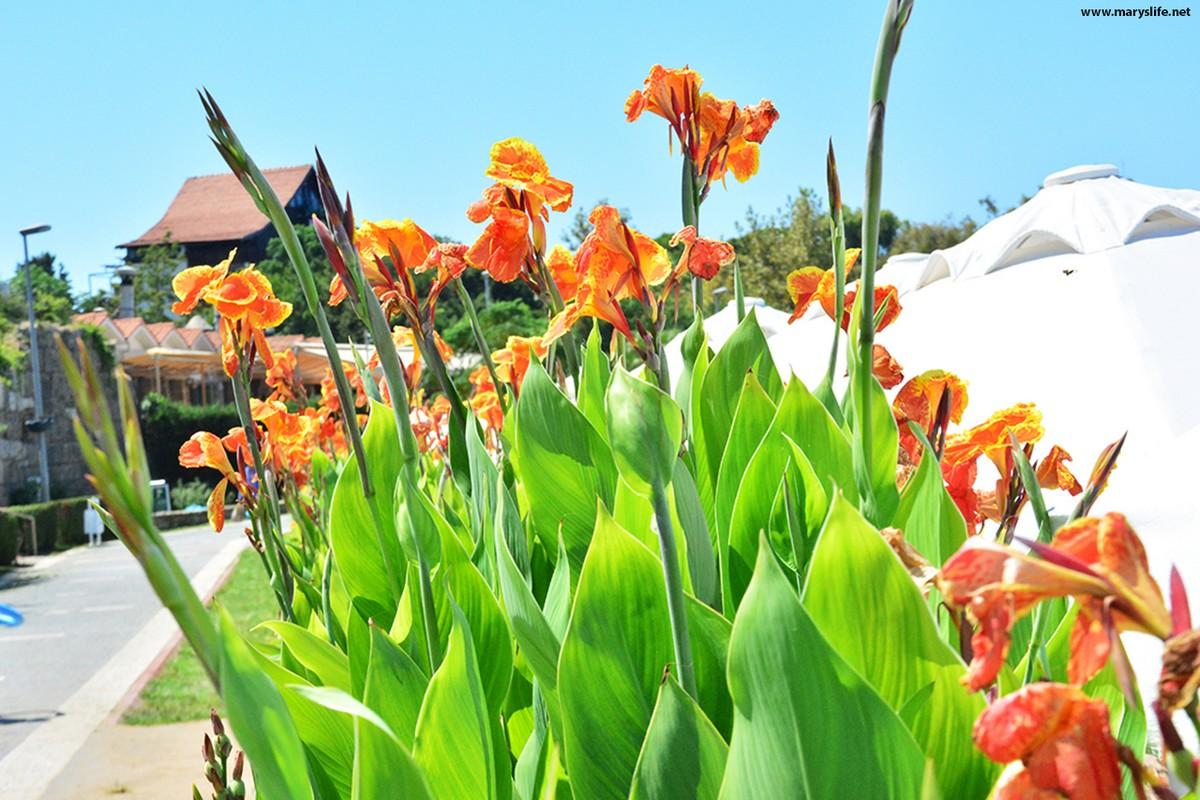 Turuncu Çiçekler