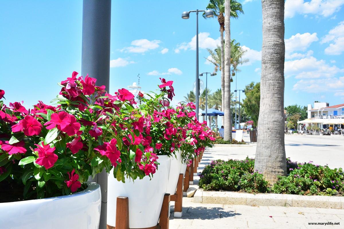Pembe Çiçek Fotoğrafları