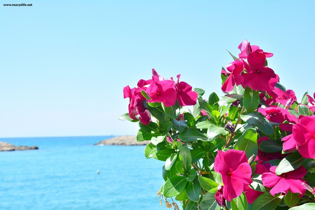 Pembe Çiçek Kapak Fotoğrafları